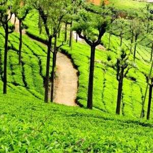 Tour packages to Ooty | Trip to Ooty
